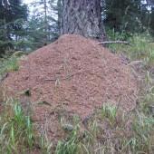 formiche Pronte per l'inverno