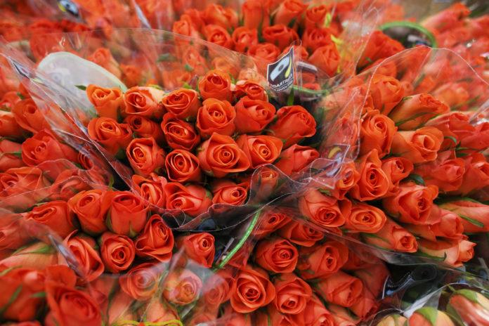 Giornata delle rose 2019